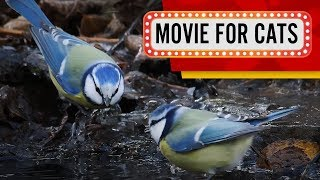 Movie for Cats - BATH FOR TIT-BIRDS (VIDEOS FOR CATS TO WATCH) 4K 50FPS