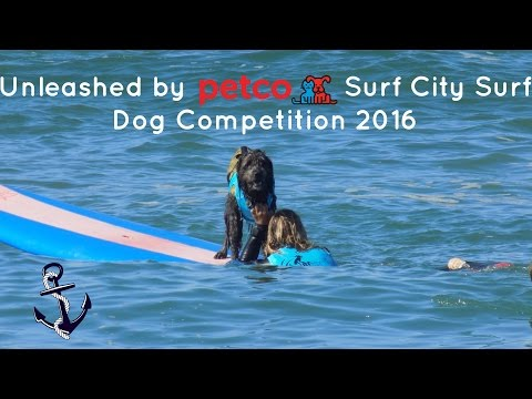 Surf City Surf Dog 2016
