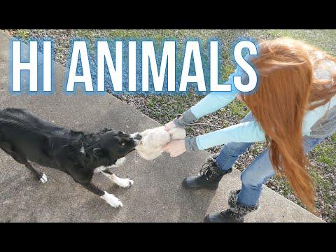Hi Animals!!