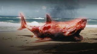 Atomowy rekin - STRESZCZENIE #24