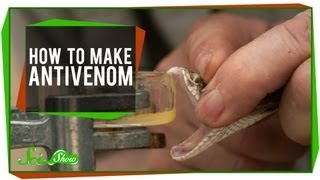 How To Make Antivenom