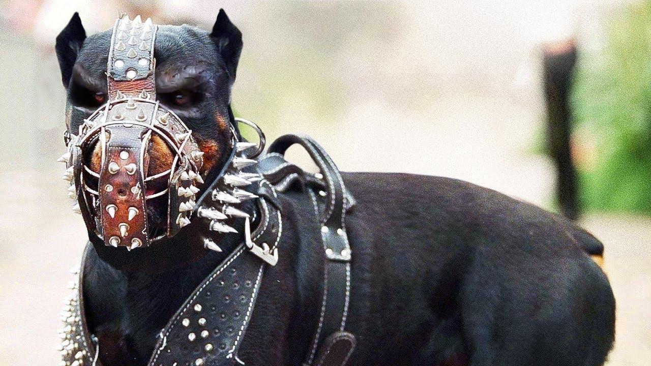Эти Собаки Запрещены во Многих Странах Мира