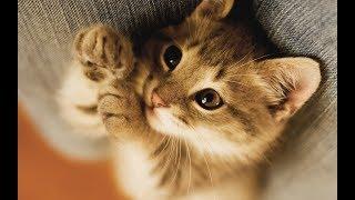 Милые и смешные котики | Подборка видео приколов про кошек и котят