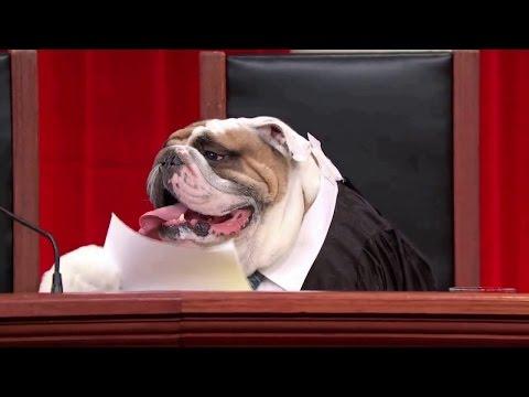 Florida v. Harris: Oral Argument - October 31, 2012