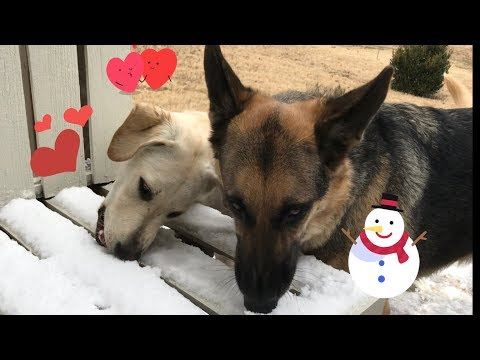 Odin and Hannah eating Snow Together