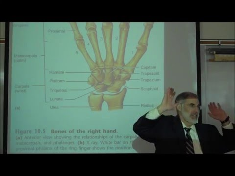 THE UPPER APPENDICULAR SKELETON by Professor Fink