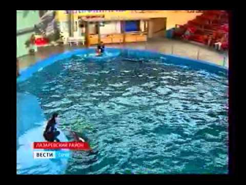 Родился дельфиненок