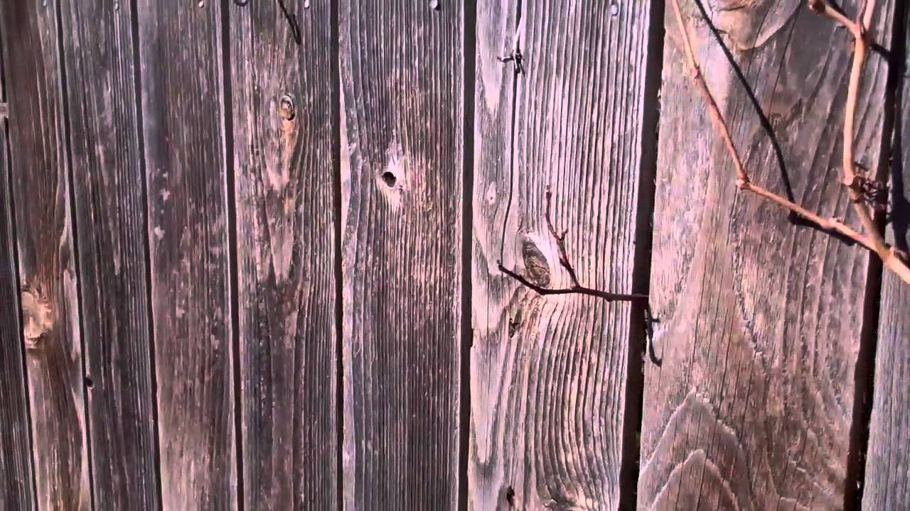 Merveilleux How To Paint An Old Wood Picket Fence.   YouTube
