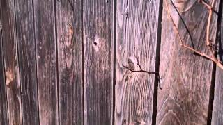 How to paint an old wood picket fence.