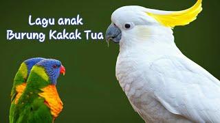 BURUNG KAKAK TUA - LAGU ANAK INDONESIA POPULER