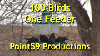 What happens when hundreds of hungry brown-headed cowbirds descend ...