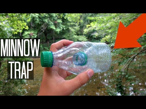 Minnow Trapping Homemade Water Bottle Trap Does It Work