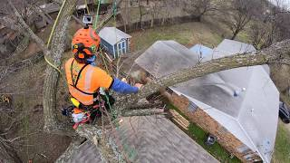 TREE REMOVAL, NEXT TO HOUSE