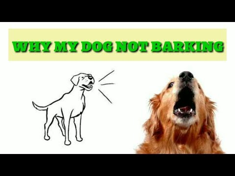 Pet Care -  Why My Dog Not Barking hindi