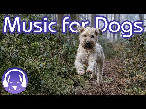 how-to-relax-my-dog:-15-hours-of-music-to-instantly-calm-your-dog!-(2019!)
