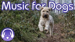 Download How to Relax My Dog: 15 Hours of Music to INSTANTLY Calm Your Dog! (2019!) Mp3 and Videos