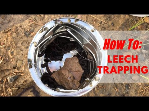 Leech Trapping (How To)