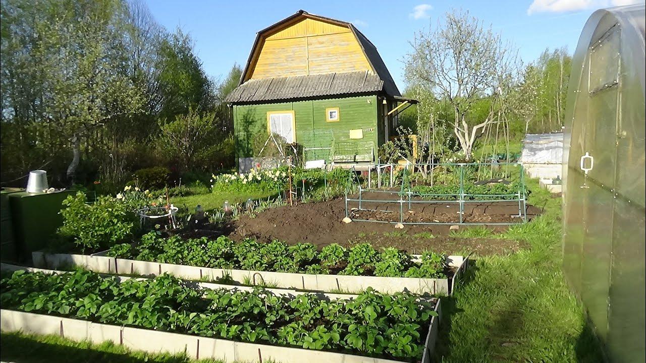 Обзор сада огорода в мае 2020г Кострома