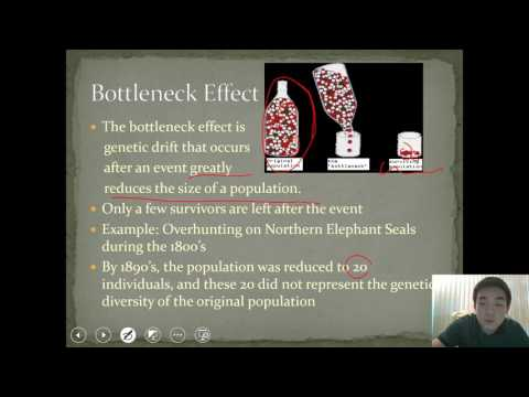 Video Lecture #16: Population Genetics