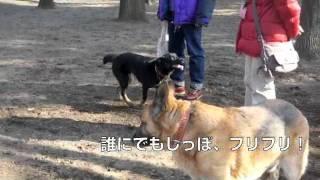 里親さん募集中のミックス犬アンの動画です。どうぞよろしくお願いします.