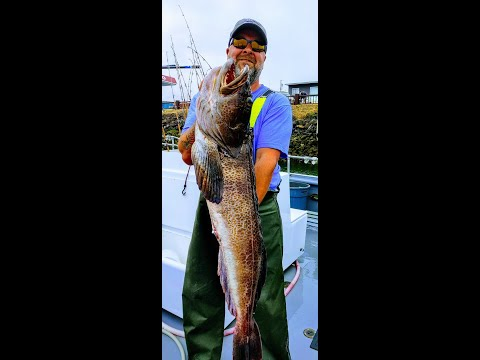Ling Cod And Sea Bass Fishing On The Hula Girl - Westport, WA - July 2020