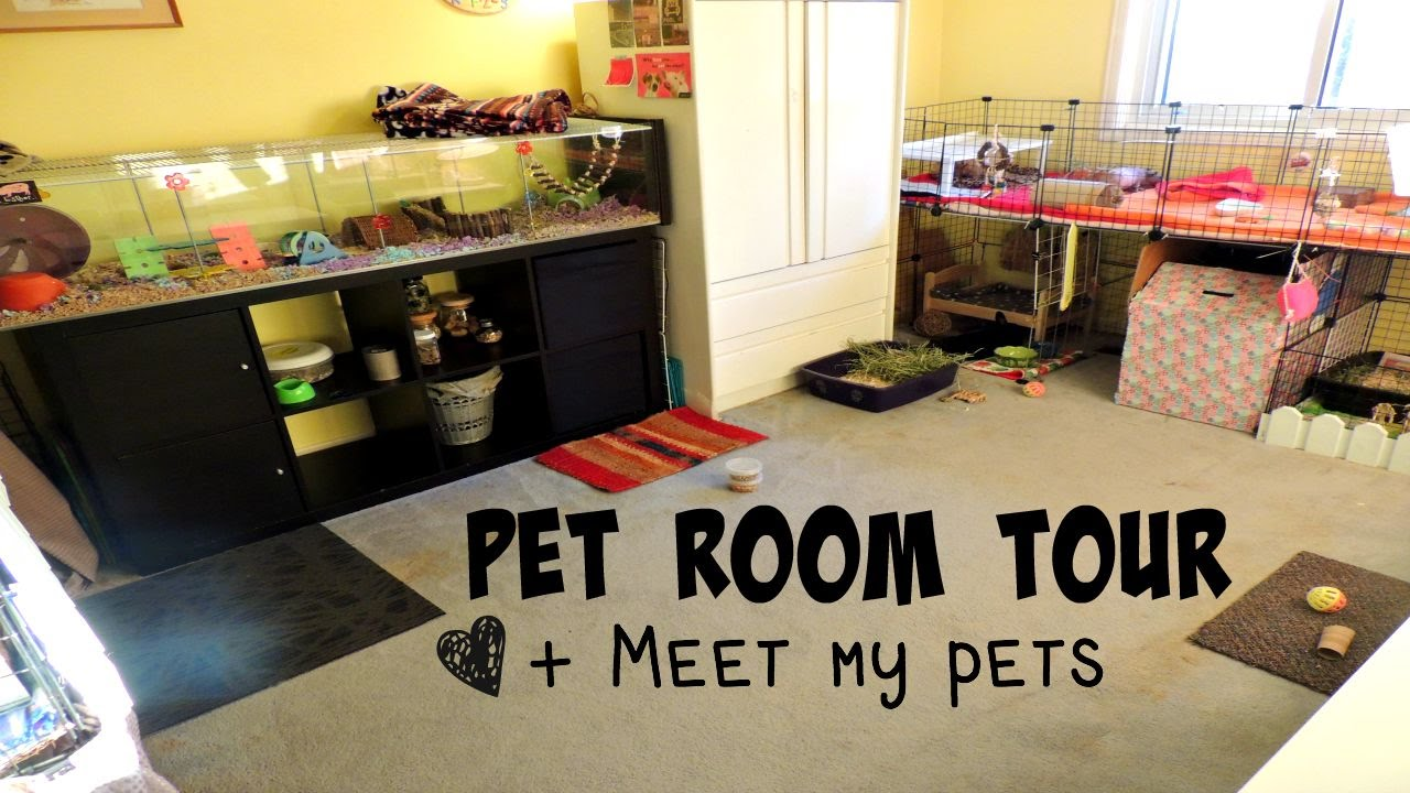 Pet Room Tour All Of My Pets 2015 Youtube