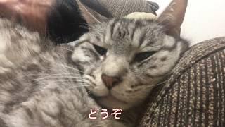 【猫動画】八ちゃん凄いねぇ! thumbnail