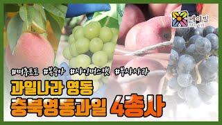 """충북영동 """"과일 4총사를 만나다!"""" …"""