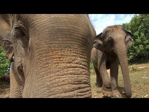 Слоны устроили погром в индийской деревне