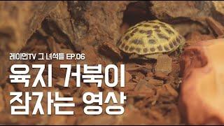 레이먼TV [몽이] E07 - 육지거북이 잠자는 영상