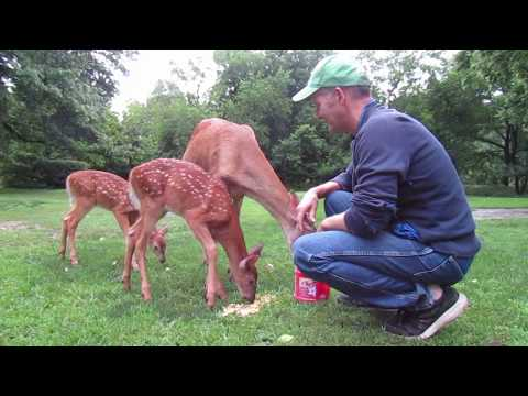 Ep 7:  My Deer Friends and New Fawns! :-) Summer 2017