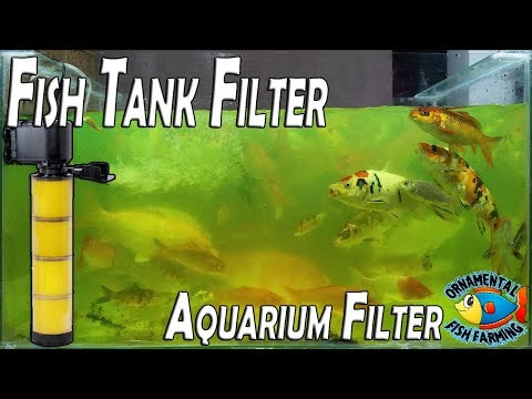 How To Setup Fish Tank Filter-aquarium Filter Crystal Clear - Filtration