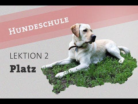 Hund Befehl PLATZ beibringen Welpe Video Kommando deutsch Hundetraining Training Hunde labrador