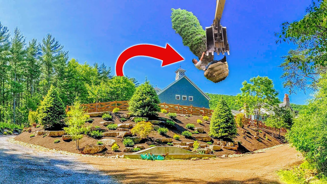 BIGGEST Trees I EVER Planted! 🌲🌲🌲 - New Landscape Makeover