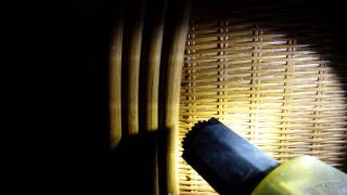 How to get rid of bed bugs | Extermiman Utah Bed Bug Exterminator