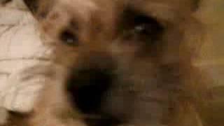 Dog posessed