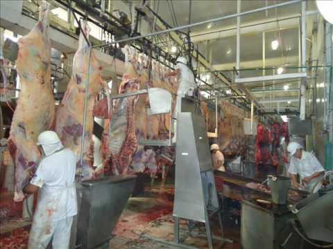 Carne de primeira - 1 part 5