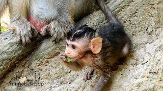 Really cute newborn monkey, Very adorable newborn monkey, Newborn monkey play with adult monkey