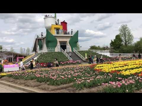 Things to do Tonami Tulip Fair 四季彩館 Japan 2017.