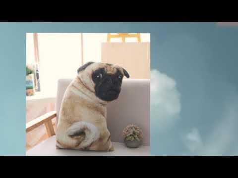 Realistic Pug Stuffed Animal, Pug Pillow Realistic Pugs Soft Toy Cushion Sofa Pillows Plush Cute Dog Tall 55cm Youtube