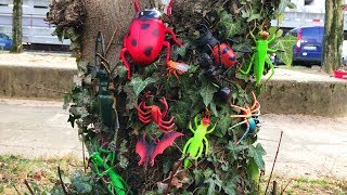 Insect Toys For Kids Learn Insect & Bugs Education Video - Pretend Look for Insect Toys on the Tree