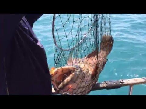 All large grouper hook ups!