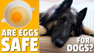 Can Dogs Eat Eggs? RAW or COOKED?