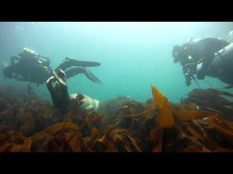 Scapa Flow 2011