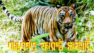 BandhavGhar Forest Safari ll Best Tiger Reserve Forest in India