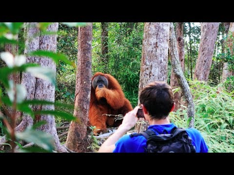 A HUGE orangutan interrupted our trek [Sumatra Jungle Trek DAY 2]