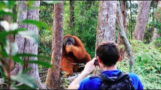 A HUGE orangutan interrupted our trek [Sumatra Jungle Trek DAY 2]
