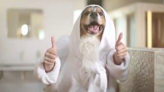 Зубная линейка для кошек и собак от Beaphar