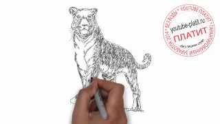 Как карандашом нарисовать злого тигра(Как нарисовать тигра поэтапно карандашом за короткий промежуток времени. Видео рассказывает о том, как..., 2014-07-10T14:01:53.000Z)