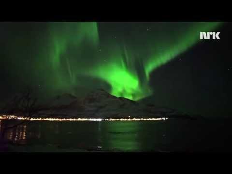 Whales Swimming Under The Northern Light // Hval jakter under nordlyset